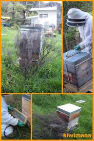 806 best bees group board images on pinterest bee keeping