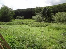 brachfläche naturschutzgebiet bei der mühle