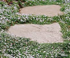 Best Plants For Rock Gardens Best Plants For Rock Gardens Creepers Walled Garden And Perennials
