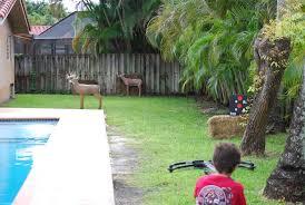backyard archery set backyard archery noblesville in photo gallery backyard
