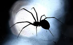 How To Keep Spiders Out Of Your Bed Here Are 13 Proven Ways To Spider Proof Your Home And Banish The
