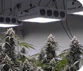commercial led grow lights led grow lights growing kits indoor commercial grow light
