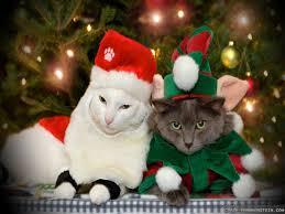 cat christmas christmas cat wallpapers 2 frankenstein