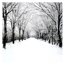 avenue of white bordered by crisply black leafless trees winter