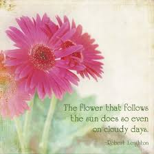 Daisy The Flower - quotes about daisies flower daisy flower quotes quotesgram