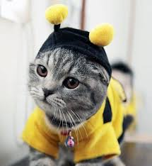 Kitten Halloween Costume Funny Creative Pet Costumes Cat Costumes Dressed Cats Cat