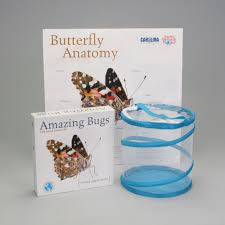 painted lady butterfly amazing bugs kit with live caterpillars