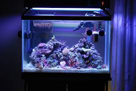 Saltwater Aquascaping Re Aquascaping Ideas Carolina Fish Talk