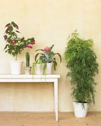 houseplants for any kind of light martha stewart