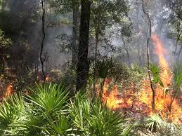 Wildfire Ranch by Wildfires Rage In Central Florida Due To Low Rainfall Trends The