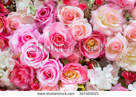 roses colors stock images royalty free images vectors