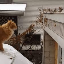 Sail Meme - cat sail meme off the snowy car top