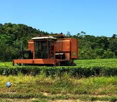 daintree tea u2013 where else but in the daintree rainforest