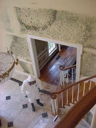 how to remove mold and detect it u0027s early signs kukun