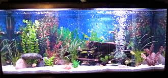 articles with freshwater aquarium design ideas tag freshwater