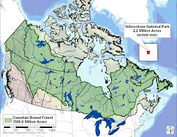 World Map Actual Size by Canada U0027s Boreal Forest In Comparison To Yellowstone National Park