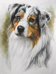 australian shepherd new hampshire australian shepherd animal paintings fine art america and paintings