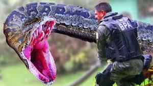 vidio film ular anaconda the man eating anaconda the biggest snake in the world