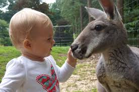 baby and kangaroo are unlikely best friends youtube