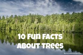 happy arbor day 10 facts about trees between us parents