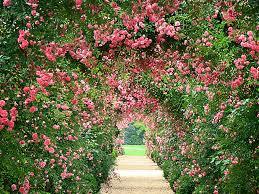 flower garden wallpaper mix u2013 best wallpaper download