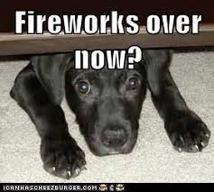 Fireworks Meme - i can has cheezburger fireworks funny animals online