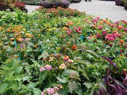 heat loving plants heat tolerant summer lovin plants garden supply co
