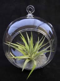 glass globe terrarium kit a