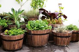 roof garden plants nurserylive 8 rooftop garden idea online at nursery live