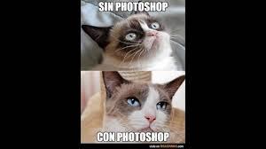 imagenes de gatitos sin frases imagenes de gatitos graciosos con frases espero que les guste 3