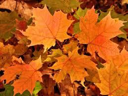 happy thanksgiving canada charles e mccracken ministries
