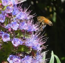 heard the buzz on backyard beekeeping bay area bites kqed food