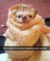 Hedgehog Meme - funny animals cute meme memes humor jokes funny pics hedgehog joke
