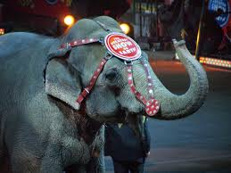 monster truck show lafayette la ringling bros circus to close after 146 years katc com