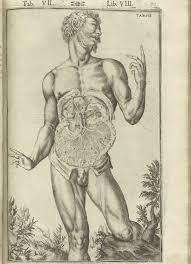 Male Internal Organs Anatomy Historical Anatomies On The Web Casseri Volume 2