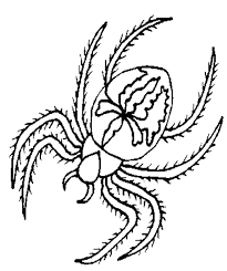 Spider Color Pages Spider Coloring Free Animal Coloring Pages Sheets Spider by Spider Color Pages