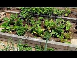 Natural Insecticide For Vegetable Garden by Vegetable Gardening Organic Pesticides For Vegetable Garden