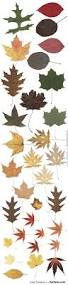 best 25 leaf images ideas on pinterest watercolor leaves leaf