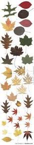best 25 autumn leaves ideas on pinterest autumn photography