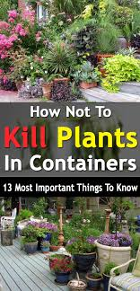 Container Flower Gardening Ideas Fall Indoor Container Gardening Vegetables Best Container
