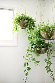 best 25 diy hanging planter ideas on pinterest diy hanging