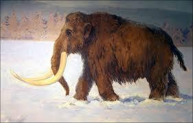 stay hilton u0027re hunting diamonds woolly mammoths