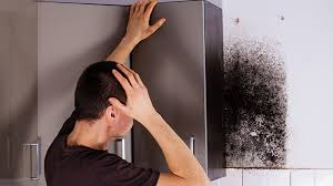 6 steps to a successful mold removal process mold experts