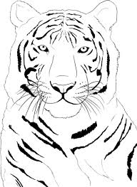 tiger face coloring pages getcoloringpages com