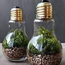 light bulb plant terrarium currently unavailable apollobox
