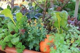 veggies herbs and flowers how to mix edible plants in the garden