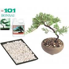 bonsai trees for sale bonsai trees at dallasbonsai