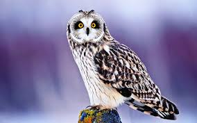 cute wildlife wallpapers free pictures download for android