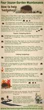 best 25 hedgehog home ideas on pinterest hedgehog cage pet