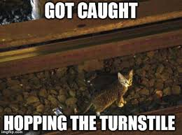 Meme Nyc - kittens so cute they stopped the trains in nyc subway ten lives